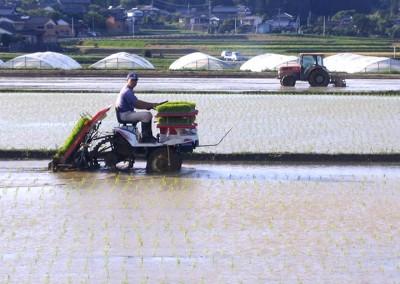 2007 Yamauchi rice field