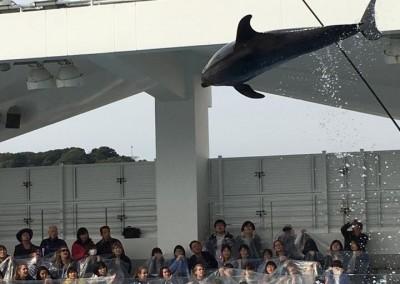 Dolphin Show at Kujukushima Pearl Sea Resort